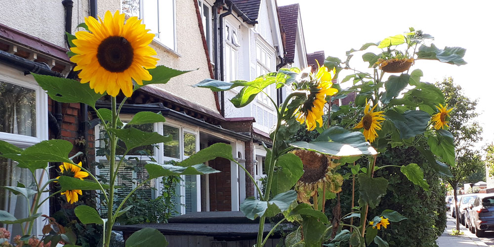 Britain's vanishing front gardens: Are we letting the most local of all green spaces disappear?